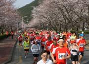 벚꽃_마라톤1