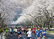 1. 제27회 경주벚꽃마라톤 (2)