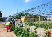 2. 경주시, 제2단계 공공근로사업 및 하반기 지역공동체일자리사업 실시 (1)