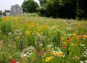 3. 중부동, 읍성지구 야생화 화원 조성으로 힐링 쉼터 마련 (1)