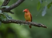 2. 옥산서원 길조(吉鳥), 좋은 소식 전해 와 호반새(1)