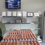 영천시, '달걀 산란일자 표시 제도' 23일부터 본격 시행