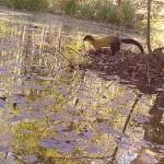 경주국립공원, 멸종위기 야생생물의 보금자리가 되다